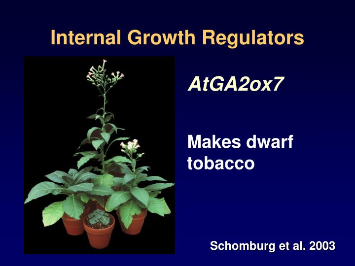 Internal Growth Regulators