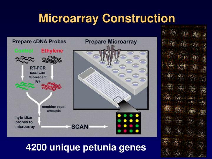 Microarray Construction