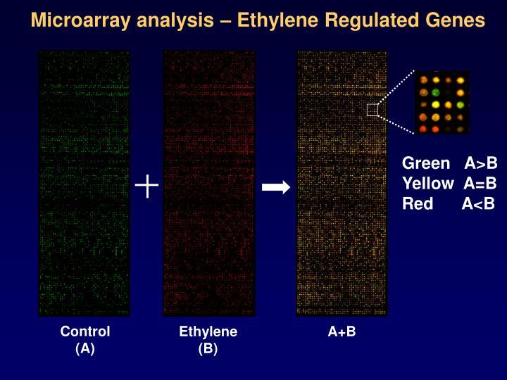 Microarray analysis – Ethylene Regulated Genes