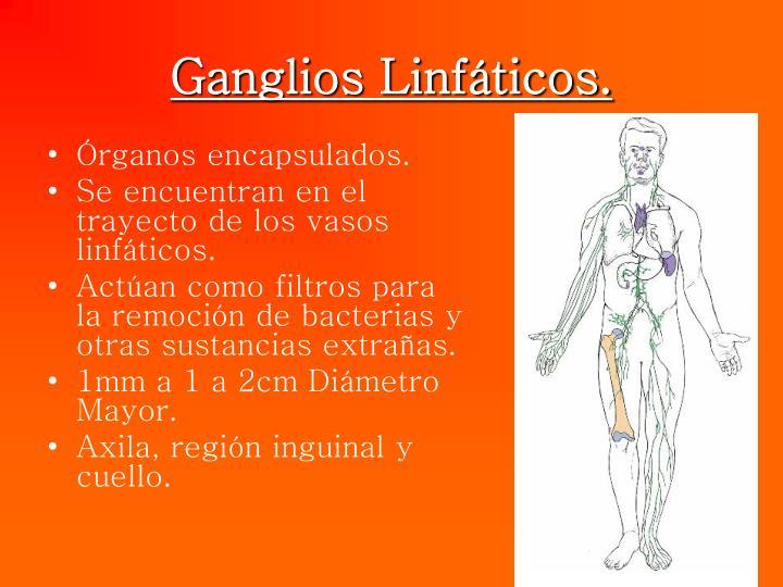 PPT - *GANGLIOS LINFÁTICOS *TIMO *BAZO PowerPoint Presentation - ID ...