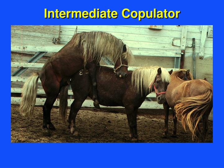 Intermediate Copulator