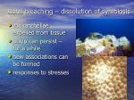 coral bleaching dissolution of symbiosis