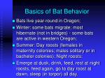 basics of bat behavior