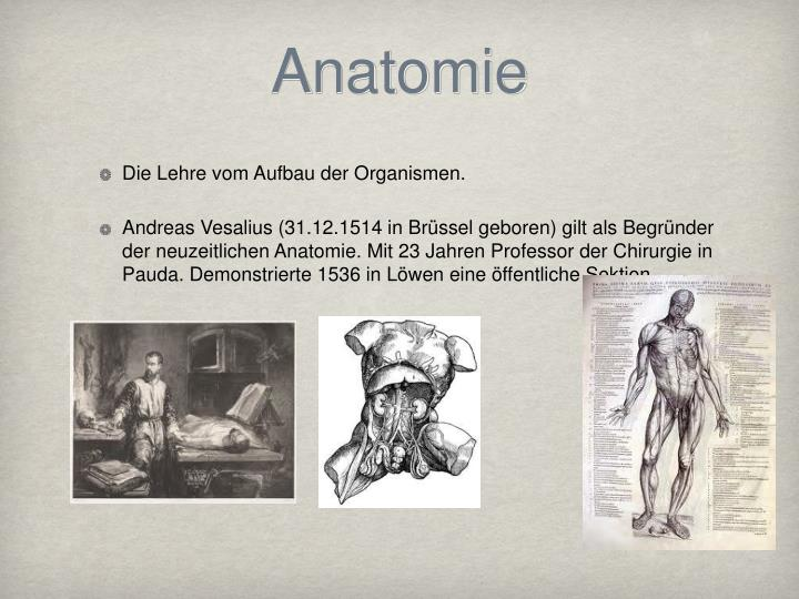 PPT - Anatomie und Histologie PowerPoint Presentation - ID:3823612