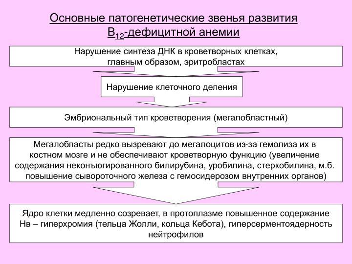 Основные патогенетические звенья развития