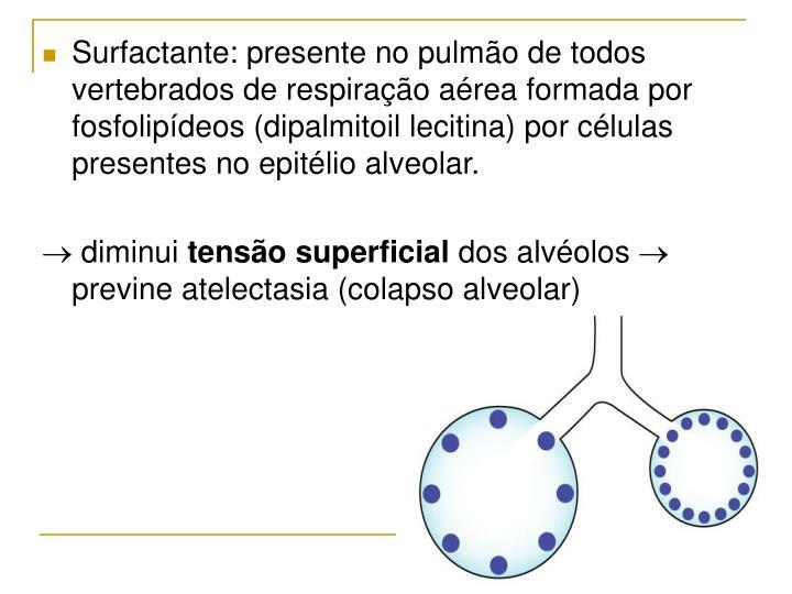 Surfactante: presente no pulmão de todos vertebrados de respiração aérea formada por fosfolipídeos (dipalmitoil lecitina) por células presentes no epitélio alveolar.