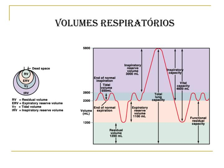 Volumes respiratórios