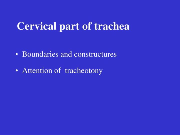 Cervical part of trachea