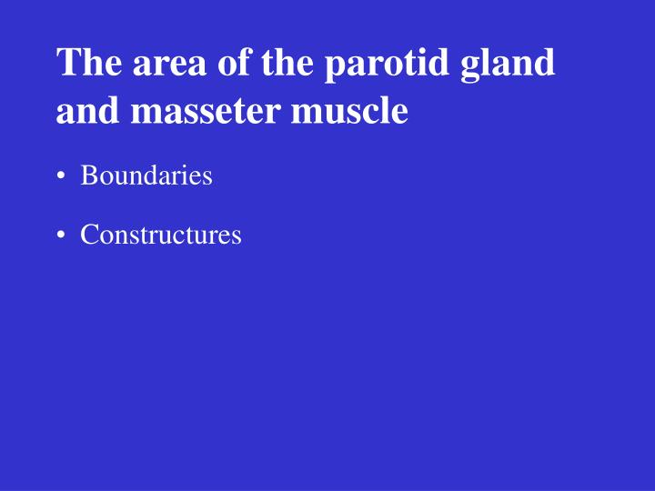 The area of the parotid gland and masseter muscle