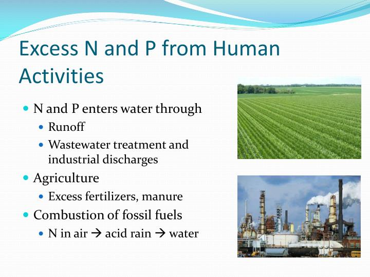 Excess N and P from Human Activities