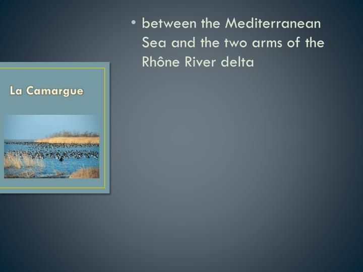 between the Mediterranean Sea and the two arms of the Rhône River