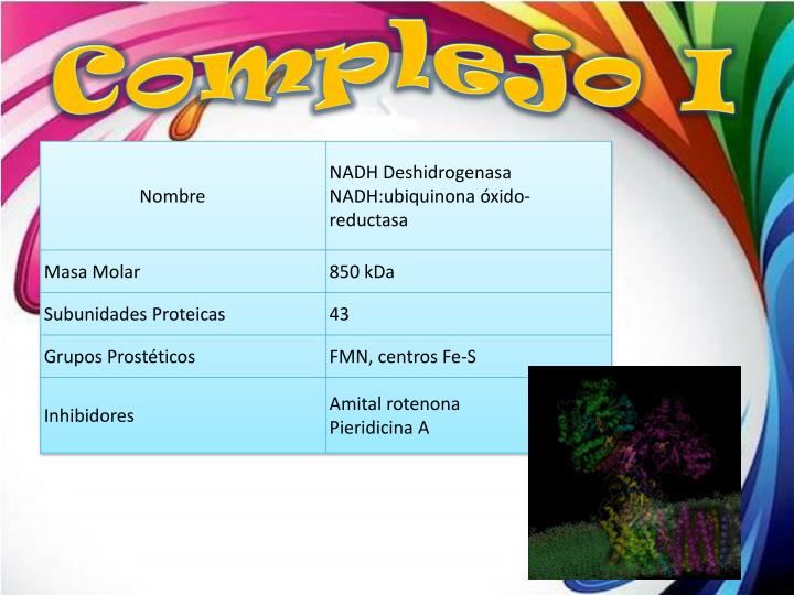 Complejo I