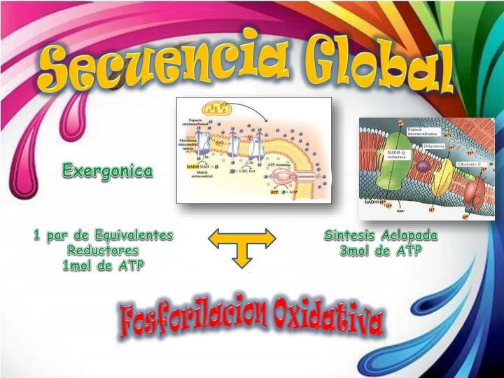 Secuencia Global