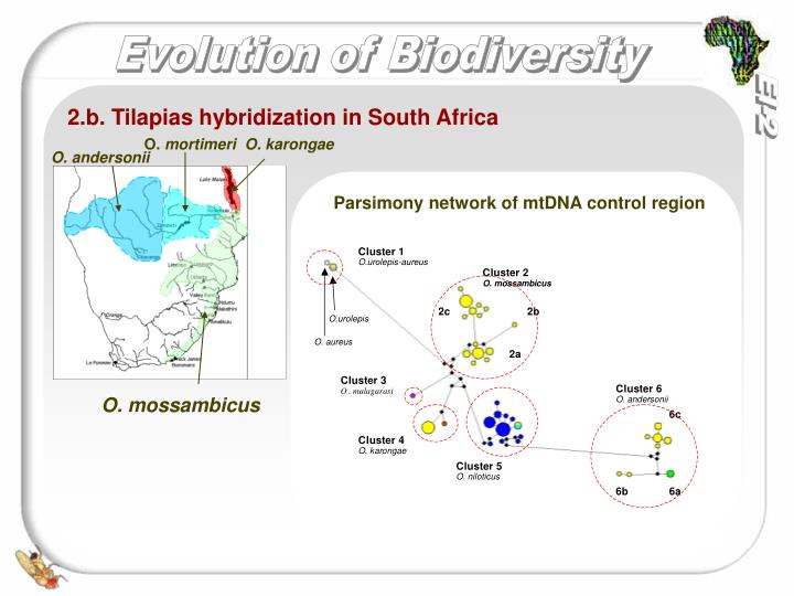 hybridization and the evolution ecology of sunflowers We have studied the origin of salt adaptation in wild sunflower hybrids (helianthus annuus × h petiolaris), the precursors of the diploid hybrid species h paradoxus, at the level of phenotypic traits and quantitative trait loci (qtls) here, we review this work and present new results on candidate gene polymorphisms.