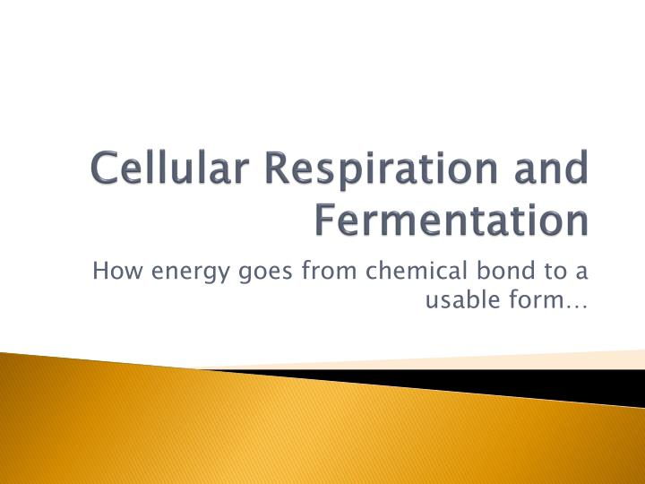 cellular respiration and fermentation n.