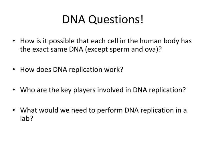 Dna questions