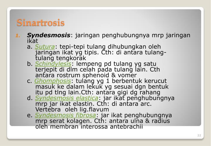 Syndesmosis