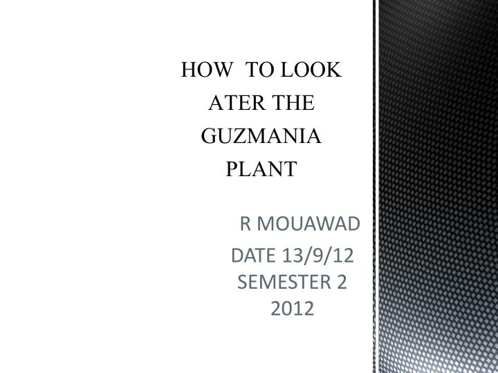 how to look ater the guzmania plant n.