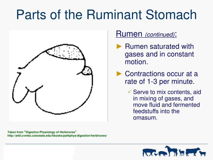 Ppt Digestive Physiology Of Farm Animals Powerpoint Presentation
