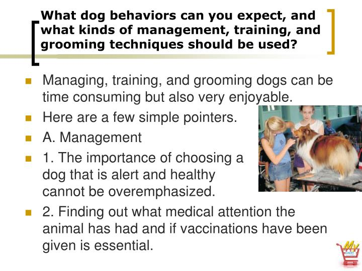 What dog behaviors can you expect, and what kinds of management, training, and grooming techniques should be used?