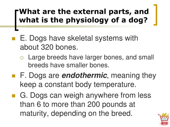 What are the external parts, and what is the physiology of a dog?