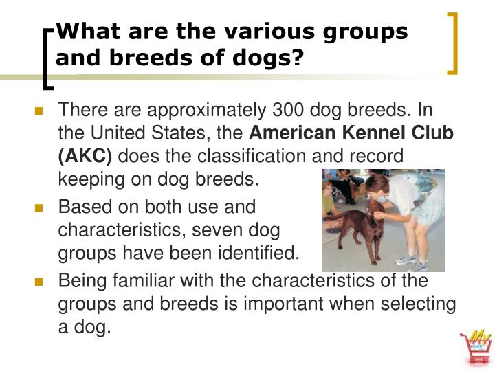 What are the various groups and breeds of dogs?