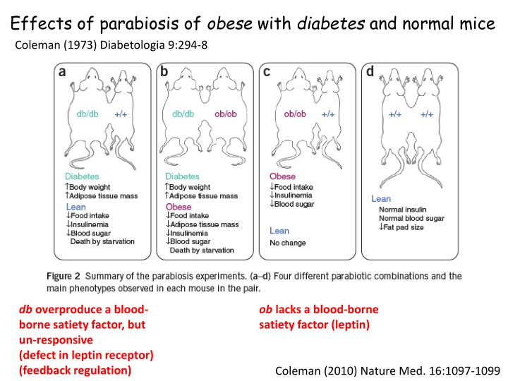 Effects of parabiosis of