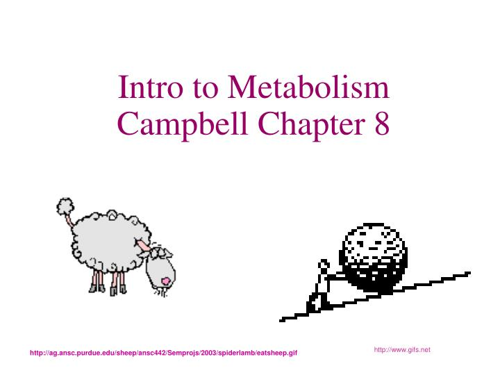 intro to metabolism campbell chapter 8 n.