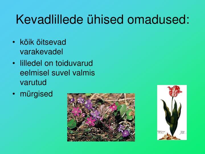 Kevadlillede ühised omadused: