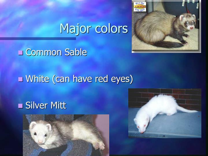 Major colors