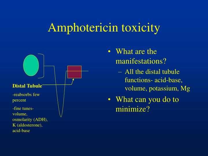 Amphotericin toxicity