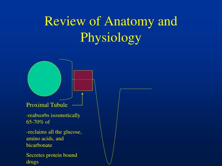 Review of anatomy and physiology1