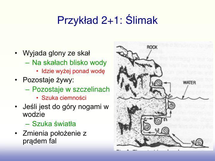 Przykład 2+1: Ślimak