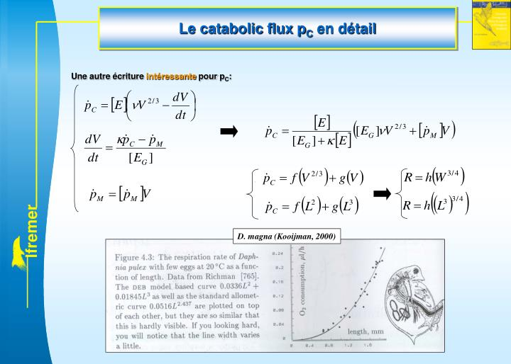Le catabolic flux p