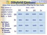 dihybrid crosses cross that shows the possible offspring for two traits