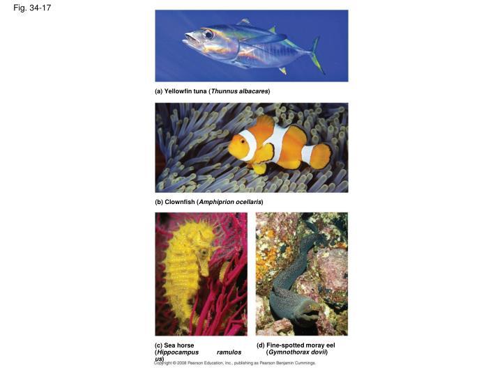 (a) Yellowfin tuna (