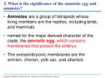 3 what is the significance of the amniotic egg and amniotes