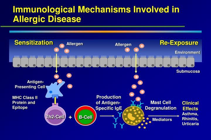 Immunological Mechanisms Involved in Allergic Disease