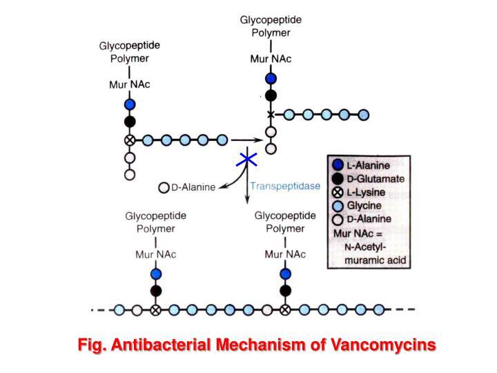 Fig. Antibacterial Mechanism