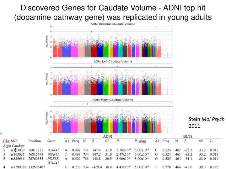 Discovered Genes for Caudate Volume - ADNI top hit (dopamine pathway gene) was replicated in young adults