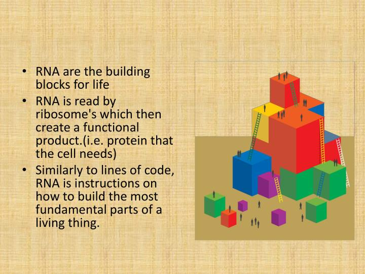 RNA are the building blocks for life