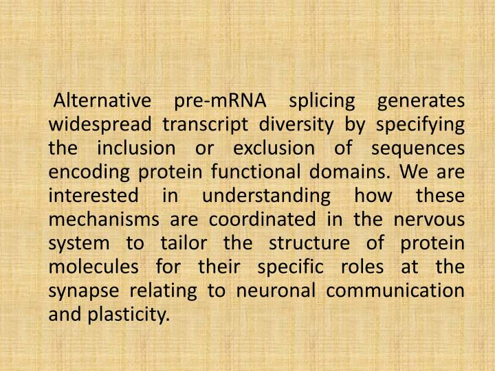Alternative pre-mRNA splicing generates widespread transcript diversity by specifying the inclusion or exclusion of sequences encoding protein functional domains. We are interested in understanding how these mechanisms are coordinated in the nervous system to tailor the structure of protein molecules for their specific roles at the synapse relating to neuronal communication and plasticity.