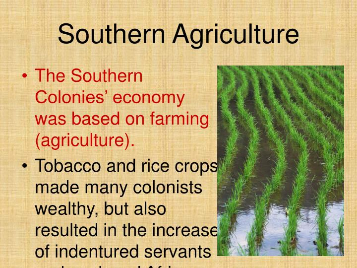 economy for southern colonies