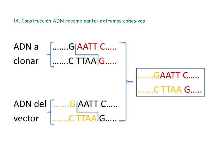 14. Construcción ADN recombinante: extremos cohesivos
