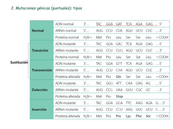 2 mutaciones g nicas puntuales tipos