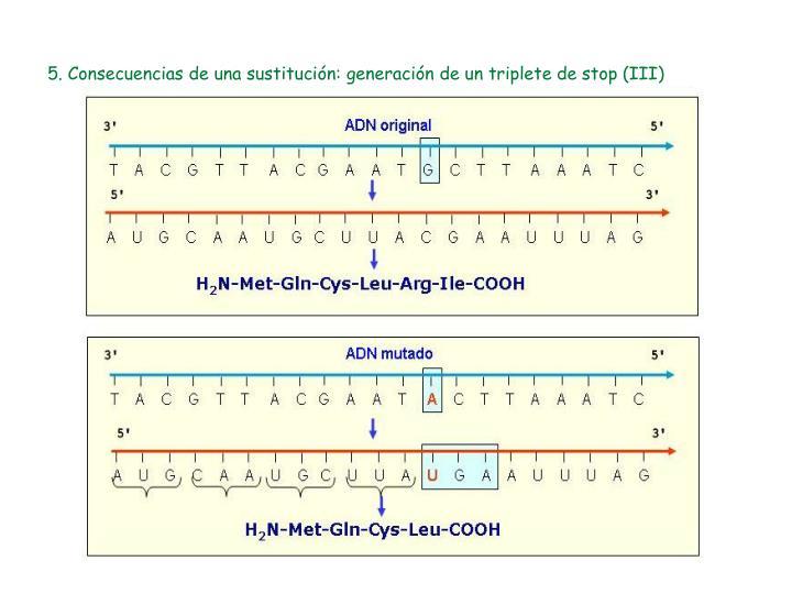5. Consecuencias de una sustitución: generación de un triplete de stop (III)