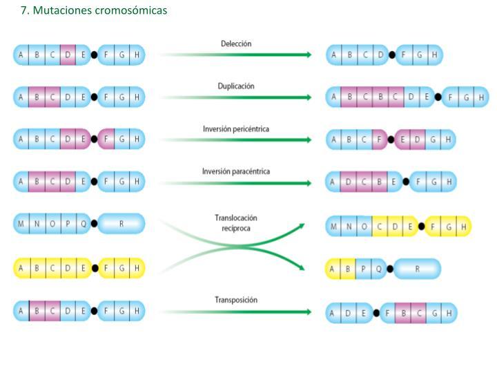 7. Mutaciones