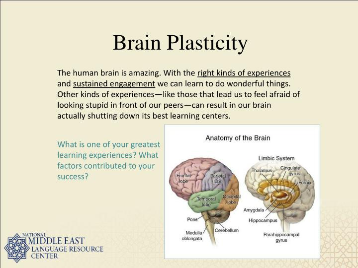"""brain plasticity """"the study of brain plasticity has a long historical connection to the beckman institute, and we are pleased to partner with ihsi to establish this center of excellence,"""" said jeff moore, director of the beckman institute."""