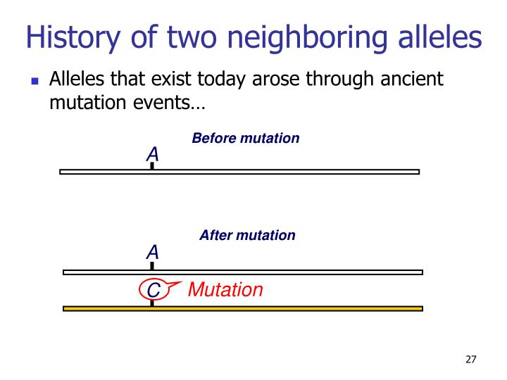 History of two neighboring alleles