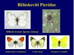 b l skovit pieridae1
